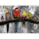 Educa-17984 Oiseaux dans la Jungle