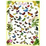 Eurographics-6000-0077 Papillons