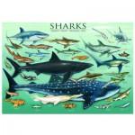 Eurographics-6000-0079 Requins