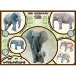 Eurographics-6000-0241 L'éléphant