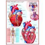 Eurographics-6000-0257 Le coeur