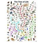 Eurographics-6000-0282 L'évolution - l'arbre de vie