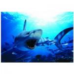 Eurographics-6000-0299 Requin affamé