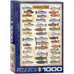 Eurographics-6000-0311 Le saumon et la truite