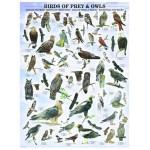 Eurographics-6000-0316 Oiseaux de proies et hiboux