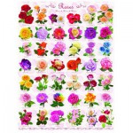 Eurographics-6000-0593 Roses
