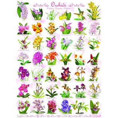 Eurographics-6000-0655 Orchidées