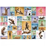 Eurographics-6000-0953 Yoga Cats