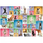 Eurographics-6000-0954 Yoga Dogs