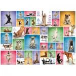 Eurographics-6000-0954 Yoga Dogs