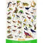 Eurographics-6000-1259 Affiche sur les Oiseaux