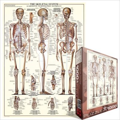 Eurographics-6000-3970 Le Système Squelettique