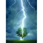 Eurographics-6000-4570 Foudre frappant un arbre