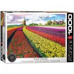 Eurographics-6000-5326 Champ de Tulipes aux Pays-Bas