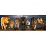 Eurographics-6010-0297 Big Cats