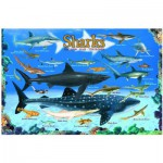 Eurographics-6100-0079 Requins