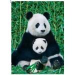 Eurographics-8000-0173 Panda et son bébé
