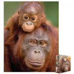 Eurographics-8104-0638 Orang-outan et son bébé