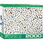 Eurographics-8220-0821 Le Monde des Oiseaux, par David Sibley