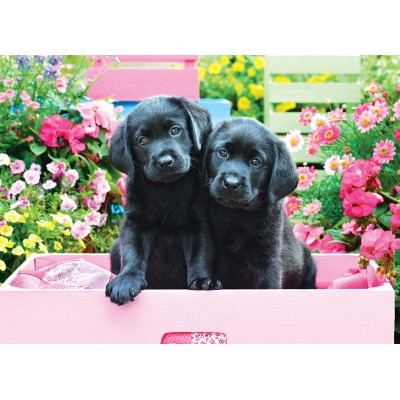 Eurographics-8500-5462 Pièces XXL - Black Labs in Pink Box