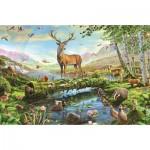 Jumbo-11143 Adrian Chesterman - Wildlife in Spring