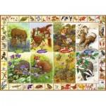 Jumbo-11200 Sarah Adams - Seasonal Wildlife