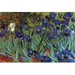 Grafika-Kids-00063 Van Gogh Vincent : Les Iris, 1889
