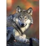 Grafika-Kids-00518 Pièces Magnétiques - Loup