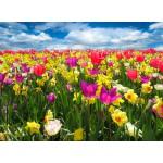 Grafika-Kids-00681 Tulipes