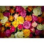 Grafika-Kids-00939 Roses