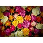 Grafika-Kids-00942 Pièces magnétiques - Roses