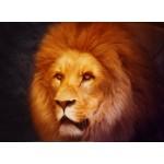 Grafika-Kids-00950 Lion