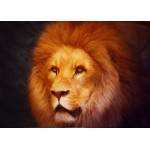 Grafika-Kids-00953 Pièces magnétiques - Lion
