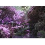 Grafika-Kids-00971 Pont Zen