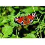Grafika-Kids-01228 Pièces magnétiques - Papillon