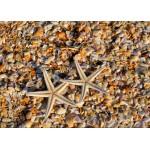 Grafika-Kids-01232 Pièces magnétiques - Coquillages et Etoiles de Mer