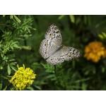 Grafika-Kids-01237 Pièces magnétiques - Papillon
