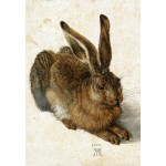Grafika-Kids-01256 Albrecht Dürer - Le Lapin, 1502