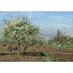 Grafika-Kids-01373 Camille Pissarro : Verger en Fleurs, Louveciennes, 1872