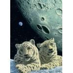 Grafika-Kids-01667 Pièces magnétiques - Schim Schimmel - Lair of the Snow Leopard