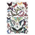 Grafika-00588 Illustration du Larousse pour Tous : Papillons, 1907-1910