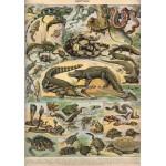 Grafika-00589 Illustration du Nouveau Larousse Illustré : Reptiles , 1897-1904