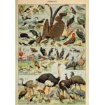 Grafika-00595 Illustration du Larousse pour Tous : Oiseaux , XIXè Siècle
