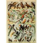 Grafika-00596 Illustration du Larousse pour Tous : Oiseaux , XIXè Siècle