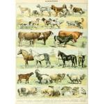 Grafika-00598 Illustration du Nouveau Larousse Illustré : Mammifères , XIXè Siècle