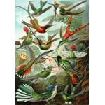Grafika-00615 Ernst Haeckel : Les Trochilidés , 1904