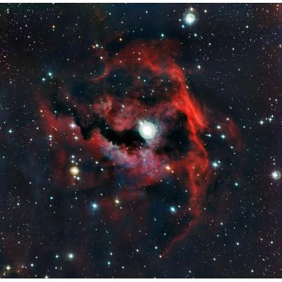 Grafika-00769 Gros plan de la tête de la Nébuleuse de la Mouette