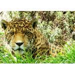Grafika-01240 Jaguar
