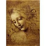 Grafika-01295 Léonard de Vinci : Visage de Giovane Fanciulla, 1508