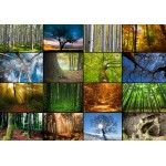 Grafika-01369 Collage - Arbres